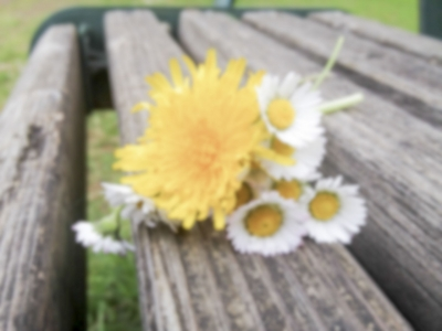 Defocused background of bouquet with daisy flowers on a bench