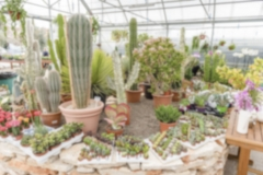 Defocused background of succulent plants inside a greenhouse
