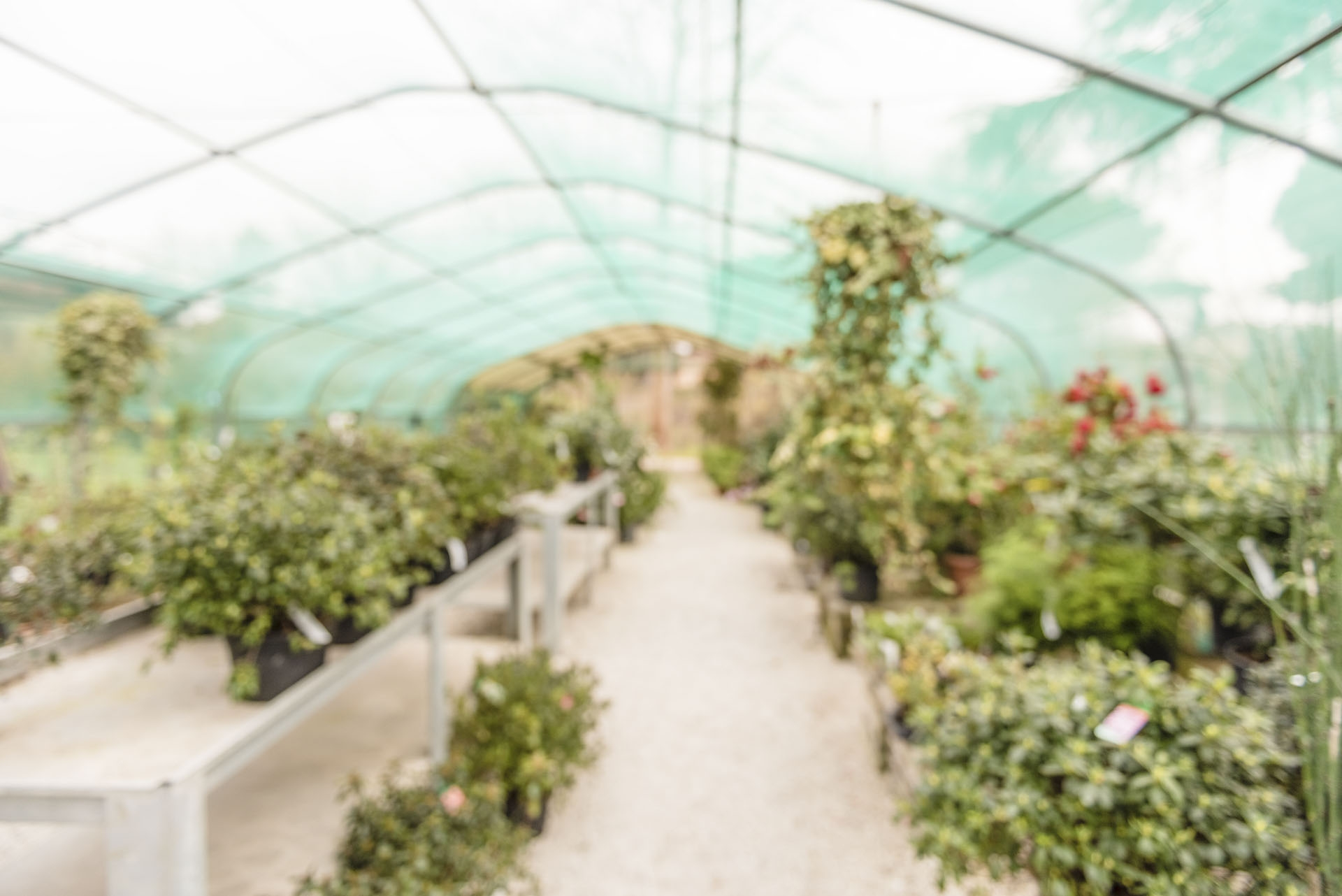 Defocused background with interiors of a greenhouse