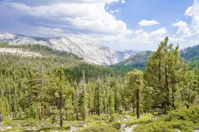 Beautiful green valley with forest in Yosemite National Park, USA
