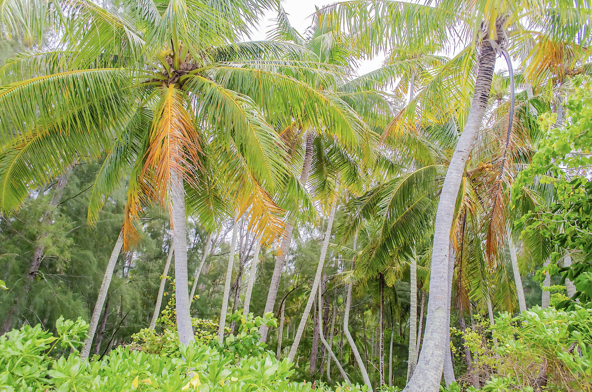 Tropical forest, French Polynesia