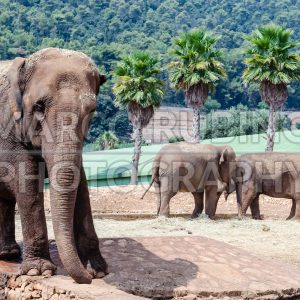 A group of elephants in a zoo