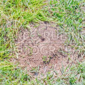Anthill closeup. Photographed on a sunny day on a park lawn
