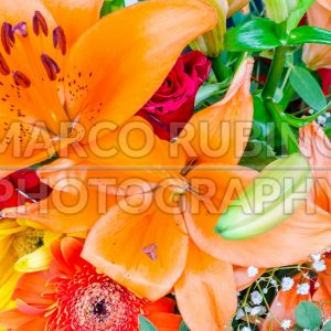 Close up with a colorful mix of flowers