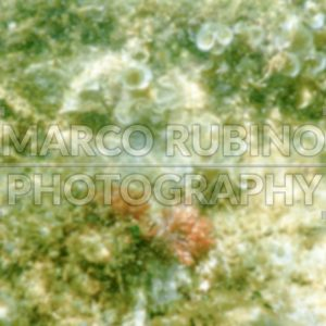 Defocused background with  white sand bottom in Salento beach, Italy