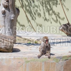Lonely baboon at the zoo
