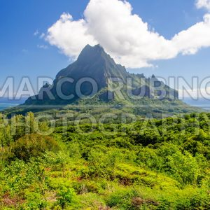 Tropical vegetation, island of Moorea, French Polynesia