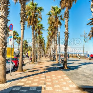Bike lane with palm trees, Barceloneta beach, Barcelona, Catalonia, Spain