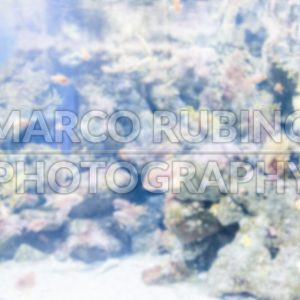 Defocused background with tropical fishes in aquarium environment