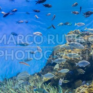 Tropical fishes in aquarium environment