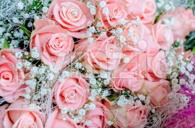 Bouquet of pink roses with small briliants Stock Photo