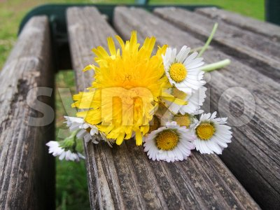 Bouquet with daisy flowers on a weathered bench Stock Photo