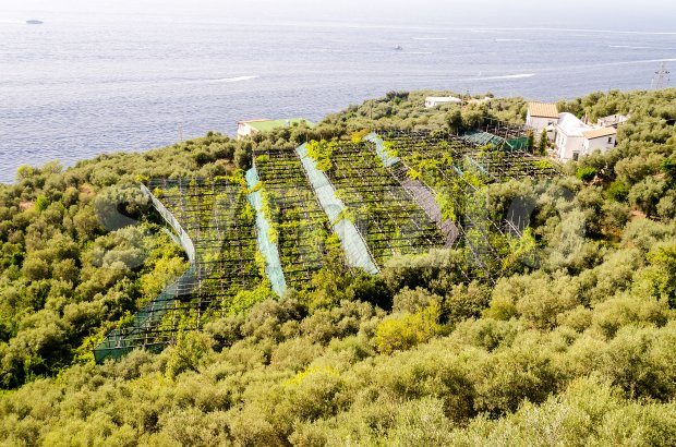 Cultivated fields by the sea near Sorrento, Italy Stock Photo