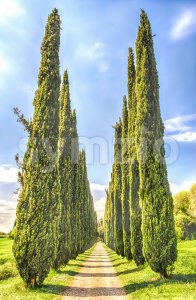 Cypress alley in Villa Adriana (Hadrian's Villa), Tivoli, Italy Stock Photo