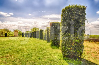 Garden with columns of bushes in a row Stock Photo