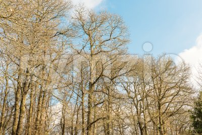 In the woods. Forest of Nemi, Italy Stock Photo