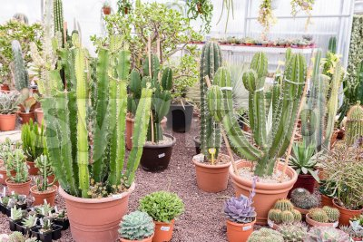 Mix of succulent plants inside a greenhouse Stock Photo
