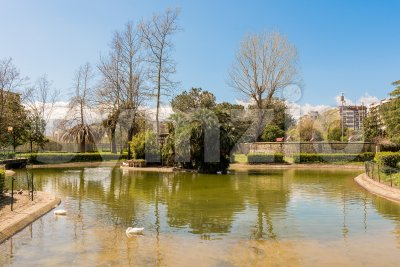 Little lake with ducks in an urban public park, Italy Stock Photo