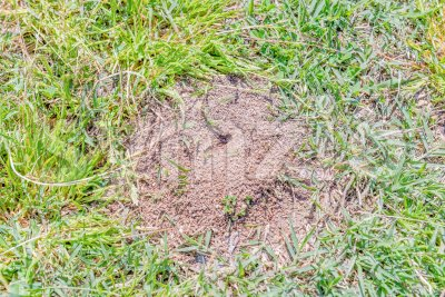 Anthill closeup. Photographed on a sunny day on a park lawn Stock Photo