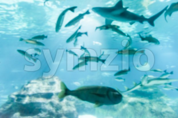 Defocused background with tropical fishes in aquarium environment Stock Photo