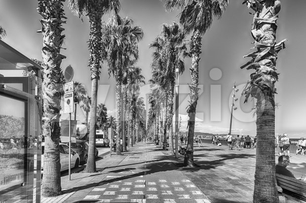 Bike lane with palm trees, Barceloneta beach, Barcelona, Catalonia, Spain Stock Photo
